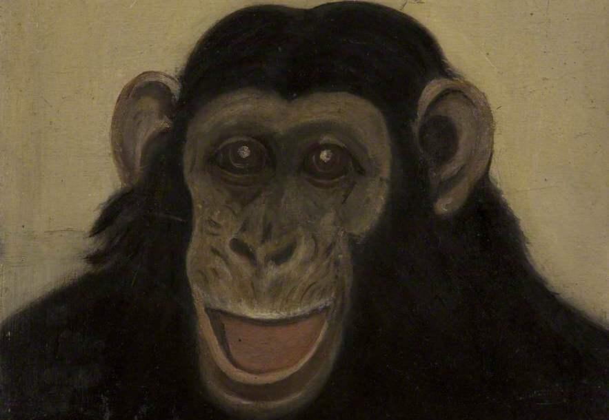 Head of an ape
